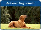 Achiever Dog Names