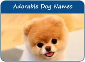 Adorable Dog Names