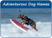 Adventurous Dog Names