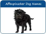 Affenpinscher Dog Names
