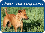 African Female Dog Names