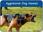 Aggressive Dog Names