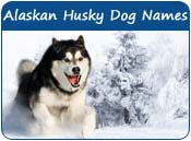 Alaskan Husky Dog Names