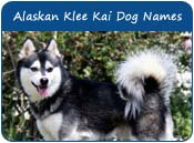 Alaskan Klee Kai Dog Names