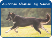 American Alsatian Dog Names