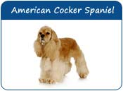 American Cocker Spaniel Dog Names