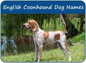 American English Coonhound Dog Names