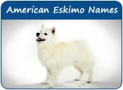 American Eskimo Dog Names
