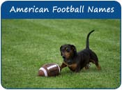 American Football Dog Names