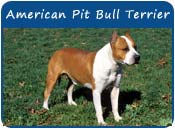 American Pit Bull Terrier Dog Names