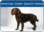 American Water Spaniel Dog Names
