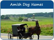 Amish Dog Names
