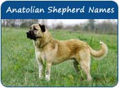 Anatolian Shepherd Dog Names
