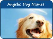 Angelic Dog Names