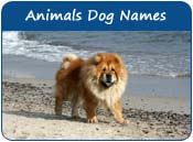 Animals Dog Names