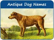 Antique Dog Names