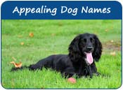 Appealing Dog Names