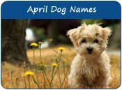 April Dog Names