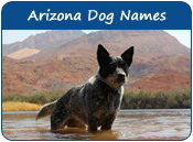 Arizona Dog Names