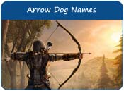 Arrow Dog Names