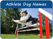 Athlete Dog Names