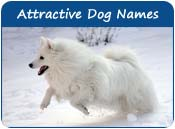 Attractive Dog Names