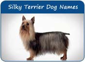 Australian Silky Terrier Dog Names