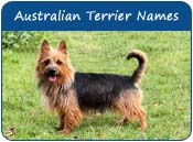 Australian Terrier Dog Names