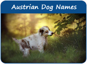 Austrian Dog Names
