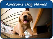 Awesome Dog Names