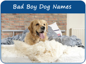 Bad Boy Dog Names