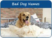Bad Dog Names