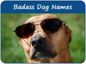 Badass Dog Names