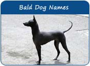 Bald Dog Names