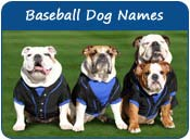 Baseball Dog Names