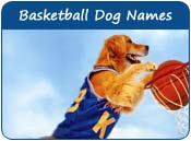 Basketball Dog Names