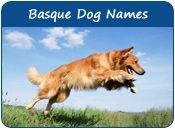 Basque Dog Names