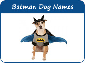 Batman Dog Names