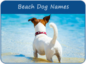 Beach Dog Names
