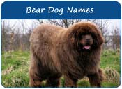 Bear Dog Names
