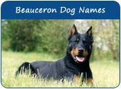 Beauceron Dog Names
