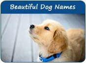 Beautiful Dog Names