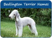 Bedlington Terrier Dog Names