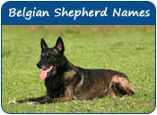 Belgian Malinois Dog Names