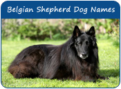 Belgian Shepherd Dog Names