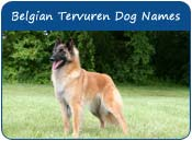 Belgian Tervuren Dog Names