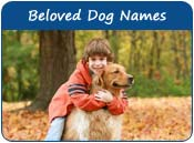 Beloved Dog Names