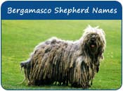 Bergamasco Shepherd Dog Names