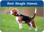Best Beagle Dog Names