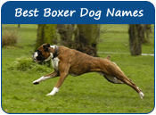 Best Boxer Dog Names
